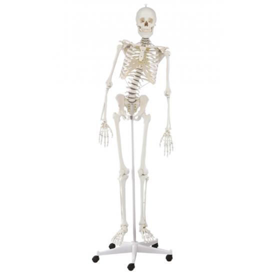 Squelette complet flexible