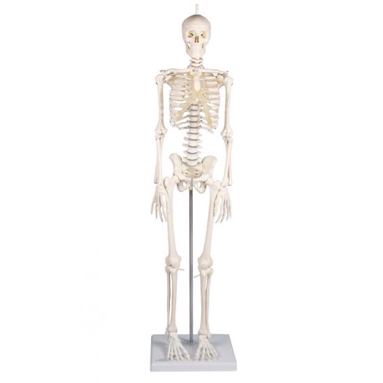Mini squelette sur socle
